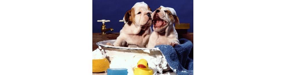 Salud higiene perros