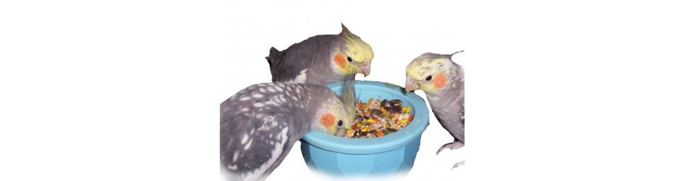Alimentación pájaros