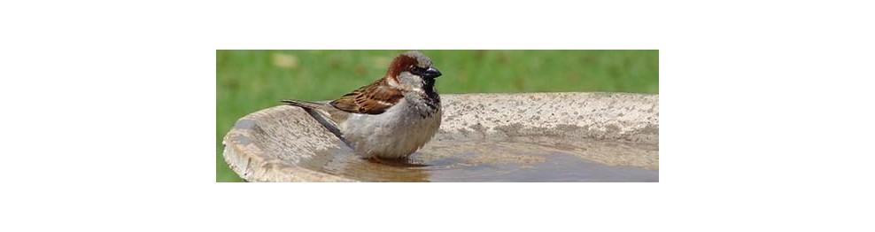 Salud higiene pájaros