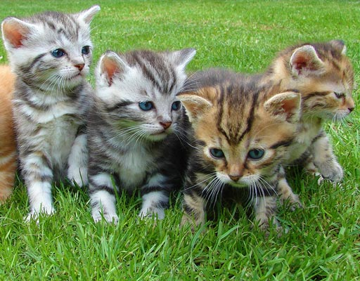 Piensos y Perros - Productos para gatos